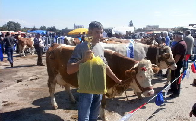 bojnik-izlozba-krava-016